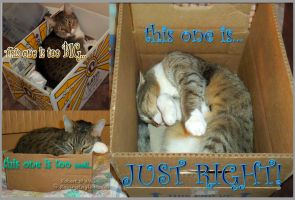 In Search of the Purrfect Box by RavingEagleMedia