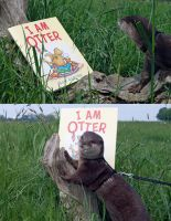 Otter book fans by samuel123