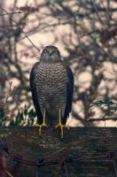 Unwelcome garden visitor 1 by piglet365