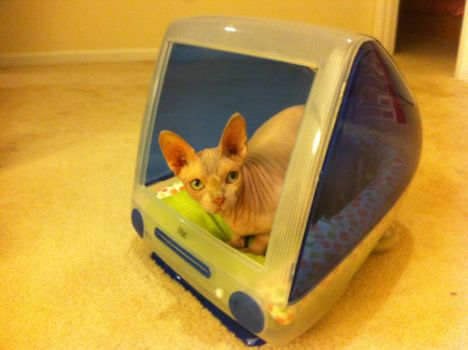 iMac Cat Bed by Whgoops
