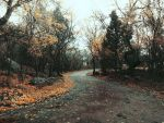 My autumn road by Chari-ot