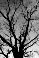 Black Tree by Anonimus79