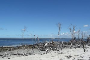 branches and beach by jessyfofys