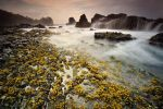 Flower At The Sea by GregoriusSuhartoyo