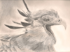 Secretary Bird #2 by Kreekakon