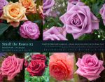 Smell the Roses 02 by kuschelirmel-stock