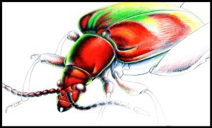 Another beetle by Heliocyan