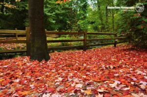 Fallen Leaves by sweetcivic