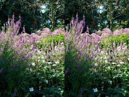 Deep Purple Coombe Wood Flower Bed In Stereo by aegiandyad