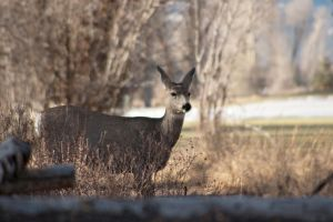 Doe by melly4260