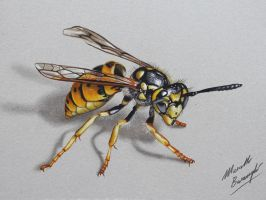 Wasp DRAWING by marcellobarenghi
