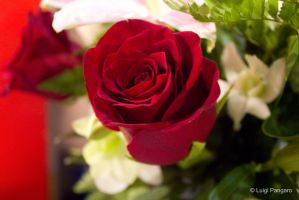 Red Rose Fresh by squidge16