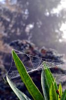 Frozen Web by Lastofthewilds666