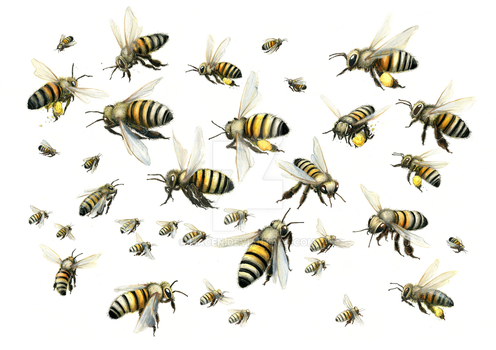BEES 2 by macen