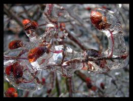 Iced Over Berries II by St0DaD