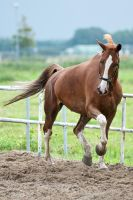 Chestnut 13 by jiphorse-stock