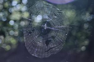 spider web by aria25