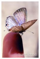 Buterfly by kaush