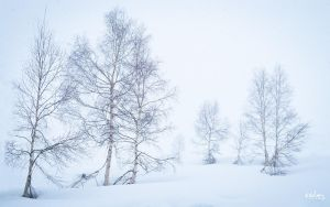 from winter II by rdalpes