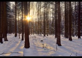 Illusionary Winter by JoInnovate