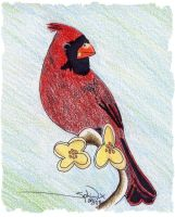 My Aunt's Cardinal by Sphinx47