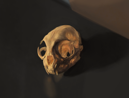 Cat skull still life by TimLiljefors