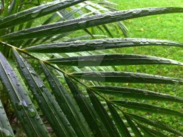 Palm Leaves in the Rain 2 by ApolloNui