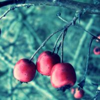 Love Berries by digitalTouch
