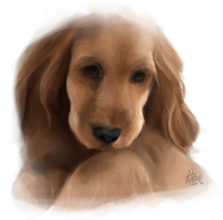 Puppy Speed-Painting by Jullith