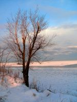 Winter Tree-2 by Rubyfire14-Stock