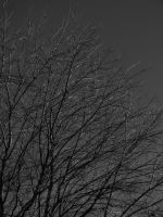 Tree--Black and White by DecThePixter