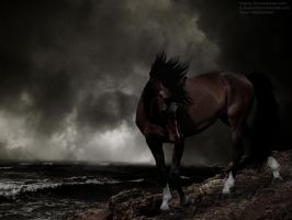 Dutch Rocky Storm by RemorseHP