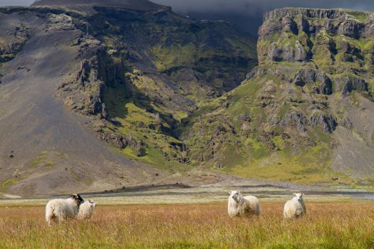 Iceland by DominikaAniola