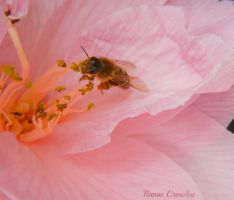 Busy bee by Ranae490
