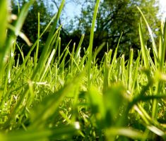 Grass by DancingwithDeers