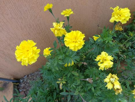 Yellow by CristianeOliveira