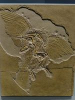 Archaeopteryx lithographica by lizardman22
