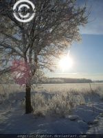 Winter in Sweden by Angelic-Fighter