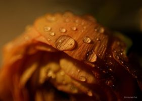 Droplets ... by AgataSwat