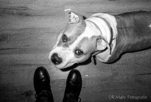 Can we go now? by TLO-Photography