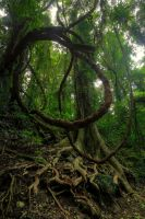 Rainforest Vine by Bjay70
