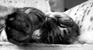 Sleeping Portrait 2 by ionantha