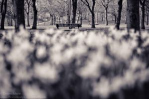 The lone bench by MarinCristina