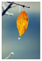 Study on leaves 1 by lawra