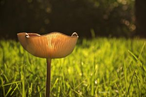 Mushroom Glow by braidsandarrows
