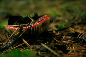 russula by rencee
