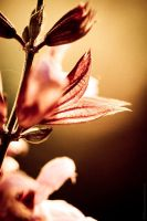 Fragrance by MDelicata