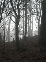 UNRESTRICTED - November '09 - Foggy Forest 13 by frozenstocks