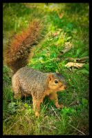 Playful Squirrel 1 by XeoPhoto