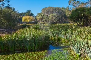 Zoo Marsh Scenery III - Exclusive HDR Stock by somadjinn